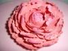 sugar_peony_flower